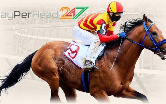 Horse Racing software at PayPerHead247